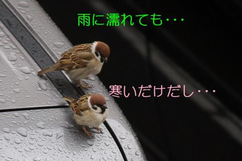 050_20110325004018.jpg