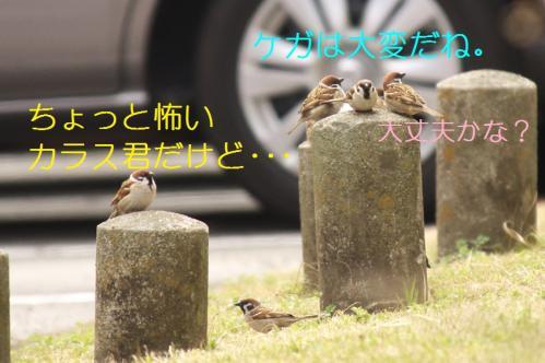 050_20110331222029.jpg