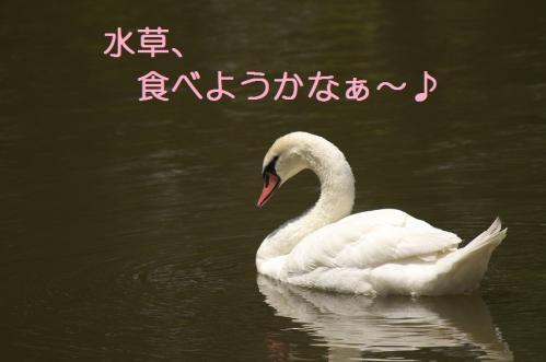 050_20110531202318.jpg