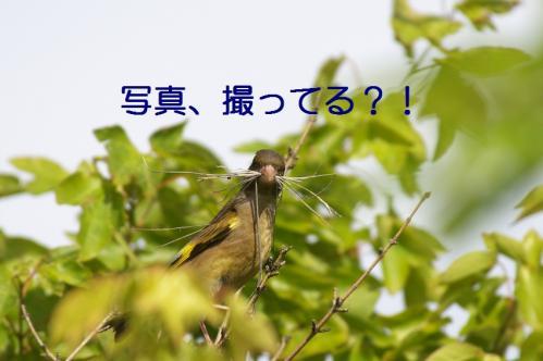 050_20110608221256.jpg