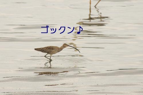 050_20110621204929.jpg