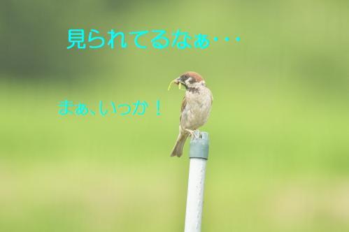 050_20110731194701.jpg