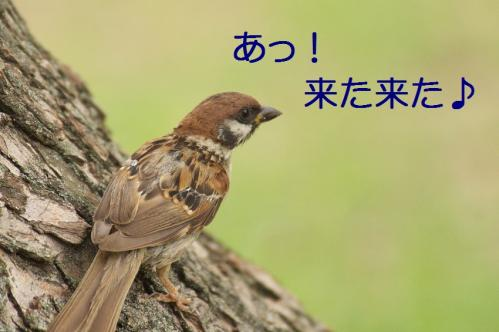 050_20110830214141.jpg