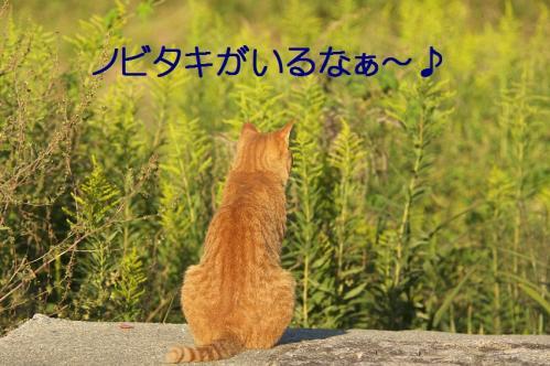 050_20111004221458.jpg