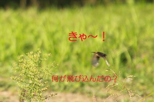 050_20111005213434.jpg
