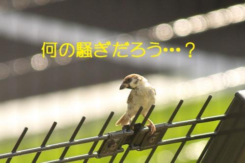 050_20111006190548.jpg