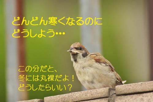 050_20111007221106.jpg
