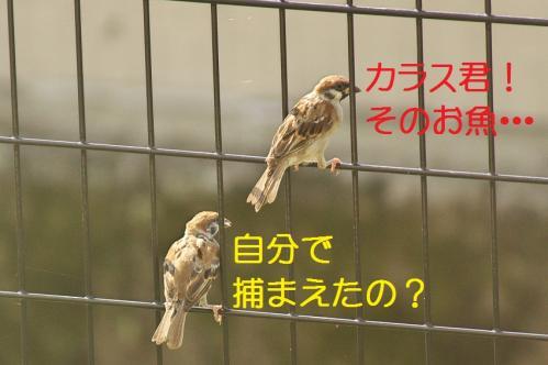 050_20111011210058.jpg