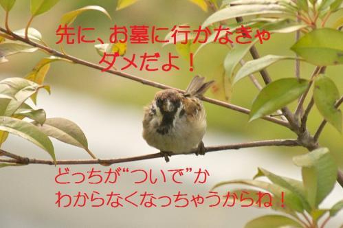 050_20111016185034.jpg