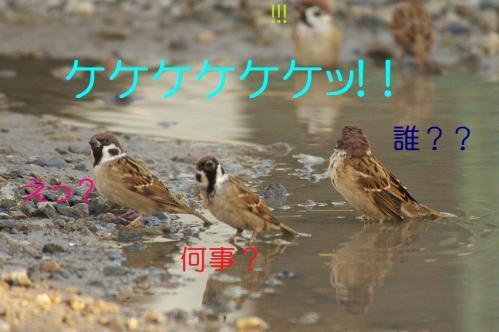 050_20111017220427.jpg
