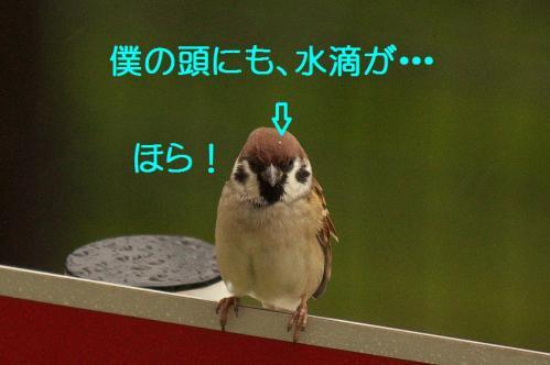 050_20111022182938.jpg
