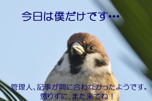 050_20111130225519.jpg