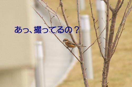 050_20111227205924.jpg