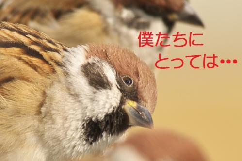 050_20111230192616.jpg