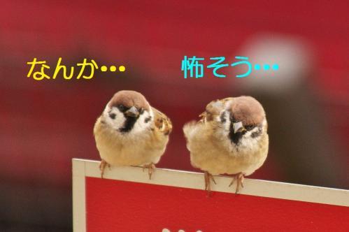 050_20120108212013.jpg