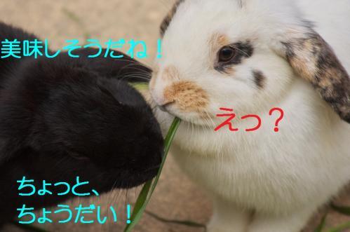 050_20120130221453.jpg