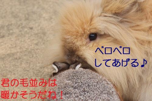 050_20120131202517.jpg