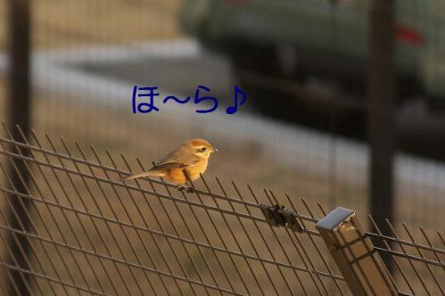 050_20120202222725.jpg