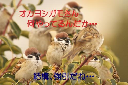 050_20120205205911.jpg