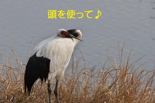 050_20120215214550.jpg
