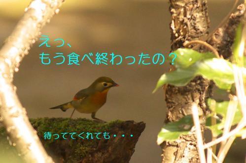 055_20110314213938.jpg
