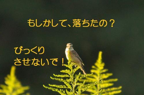 055_20111005213434.jpg