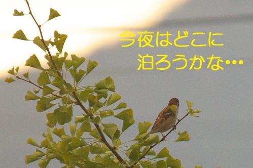 05_20101101220421.jpg