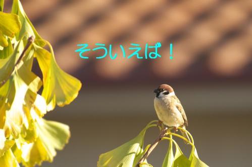 060_20101130191349.jpg