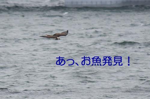 060_20101202194150.jpg