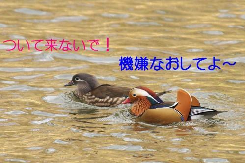 060_20101219200043.jpg