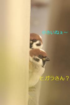 060_20110118214102.jpg