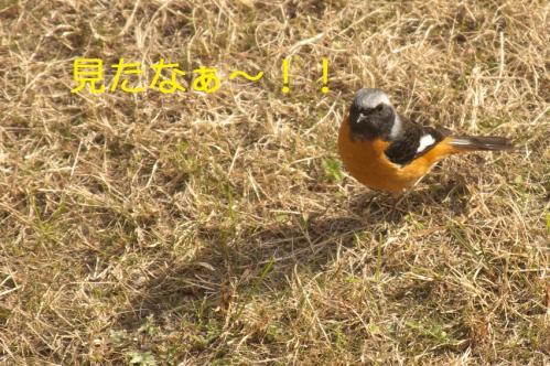 060_20110120222200.jpg