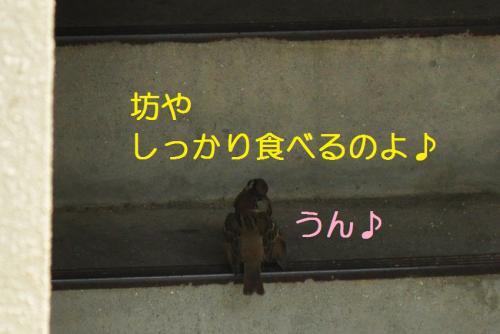 060_20110131212043.jpg