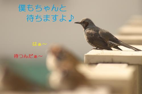 060_20110205220658.jpg