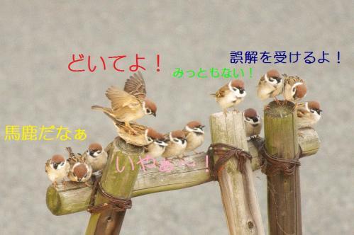 060_20110227234441.jpg