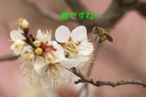 060_20110311010844.jpg