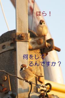 060_20110315205649.jpg