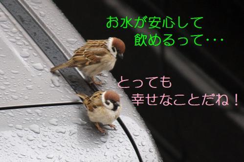 060_20110325004017.jpg