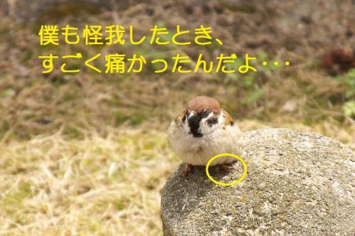 060_20110331222332.jpg
