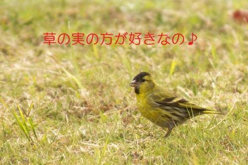 060_20110406223237.jpg