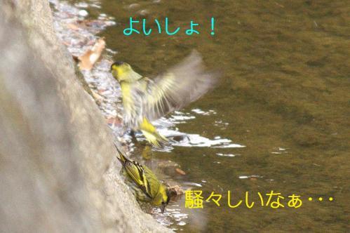 060_20110415015651.jpg