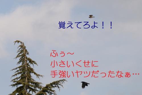 060_20110415043110.jpg