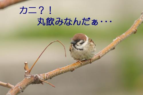 060_20110503173642.jpg