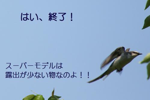 060_20110505204031.jpg