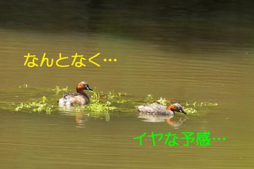 060_20110531202317.jpg