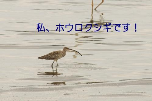 060_20110621204928.jpg