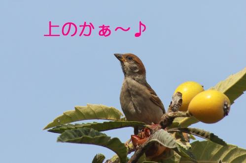 060_20110705202729.jpg