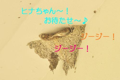 060_20110731194700.jpg