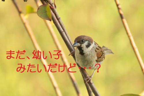 060_20110801222346.jpg