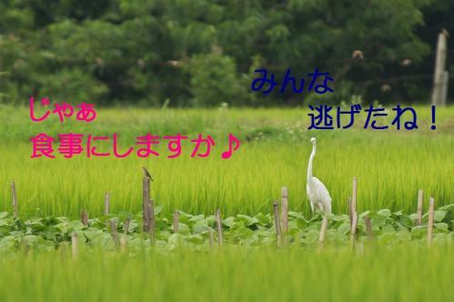 060_20110806212055.jpg